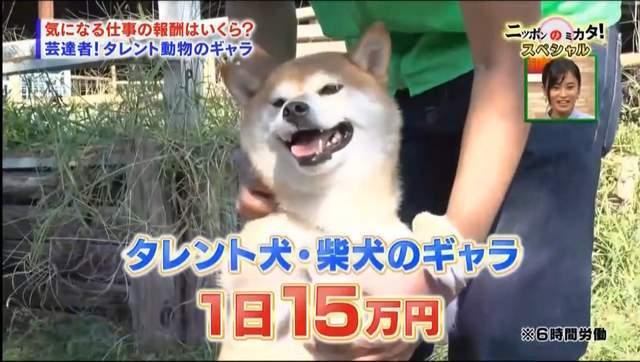 上班族崩潰了!日本明星動物一天的工資,可能比你一個月賺得還多......