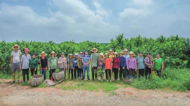 一顆黃桃,改變村落上百人的命運……