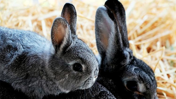 rabbit-1226371_960_720